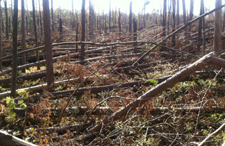 Forest destruction Oak Ridge, NJ.