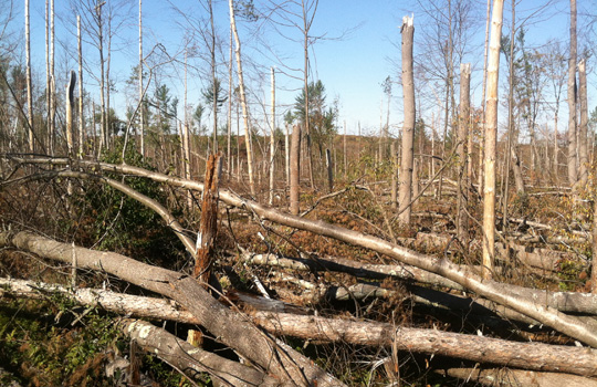 Oak Ridge forest destruction.